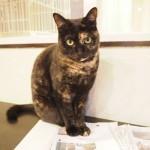 狭山市の保護猫カフェ「funnyCat」でサビ猫さんに髪の毛を匂われました