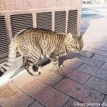 若戸大橋のふもとで道路を横切るキジトラ猫さんを追っかけました