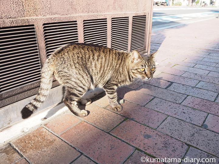 撮られたキジトラ猫さん