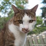博多の聖福寺でオス猫さんを追いかけました