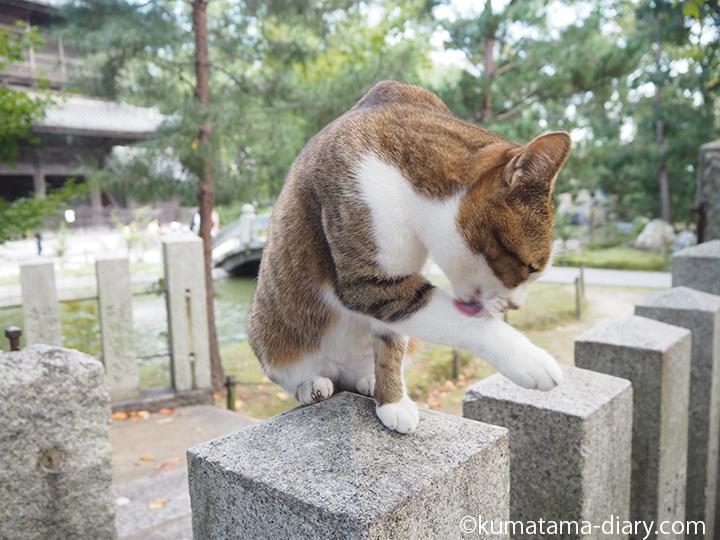 石の柱の上でグルーミング