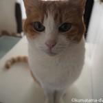 写真を撮るときに必ずやってくる猫