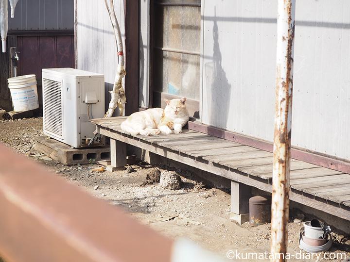 縁側でひなたぼっこする猫さん