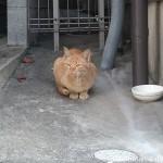 戸畑の茶トラ猫さんと若松の三毛猫さん