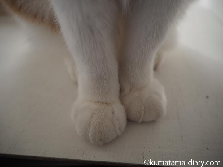 ベニヤ板の上の足