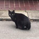 ポタリング中に出会った三毛猫さんと黒猫さん