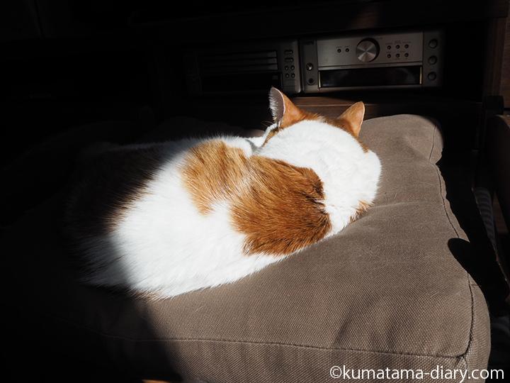 眠るたまきの後ろ姿