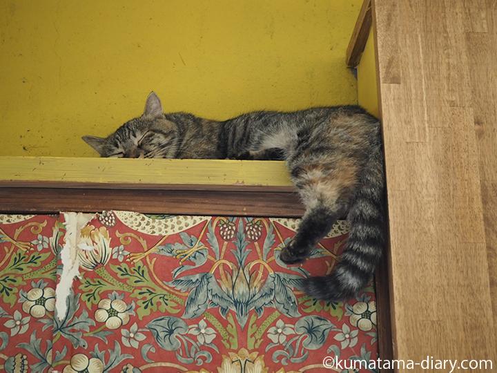 高いところで寝る猫さん