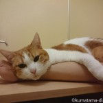 お風呂のフタの上で手首にあごを乗せる猫