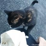 狭山市の三毛猫さんは人懐っこくスリスリしてくれました