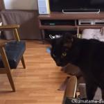 飼い主がいなくてやりたい放題の猫たち
