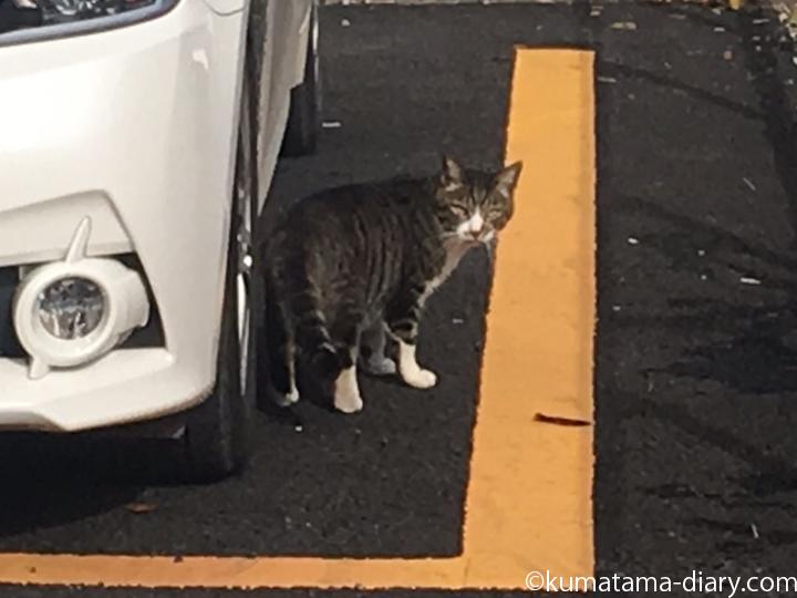 駐車場の猫さんの顔