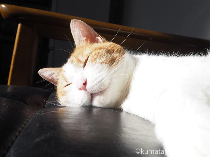 Kチェアで寝るたまきの顔