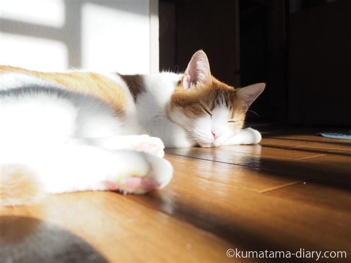 床で眠るたまき