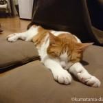 石油ファンヒーターの前で前足を伸ばして眠る猫
