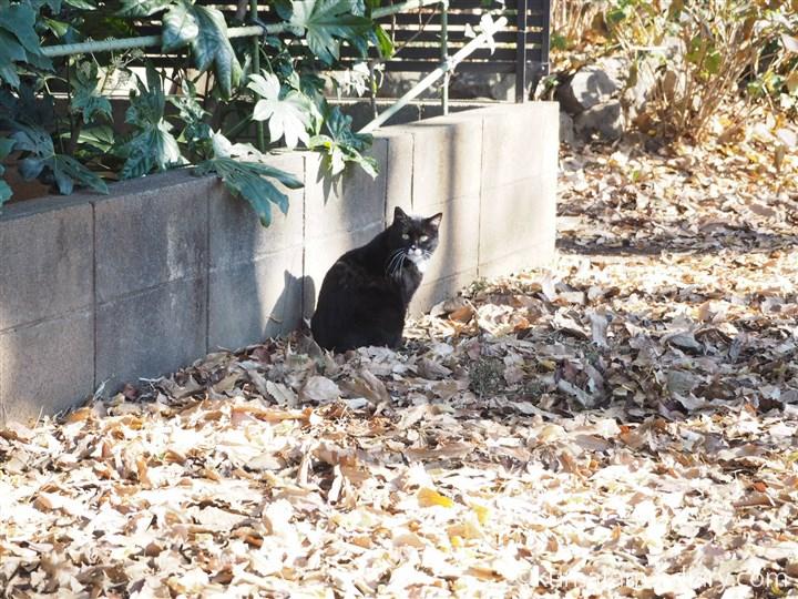 気づいた黒白猫さん