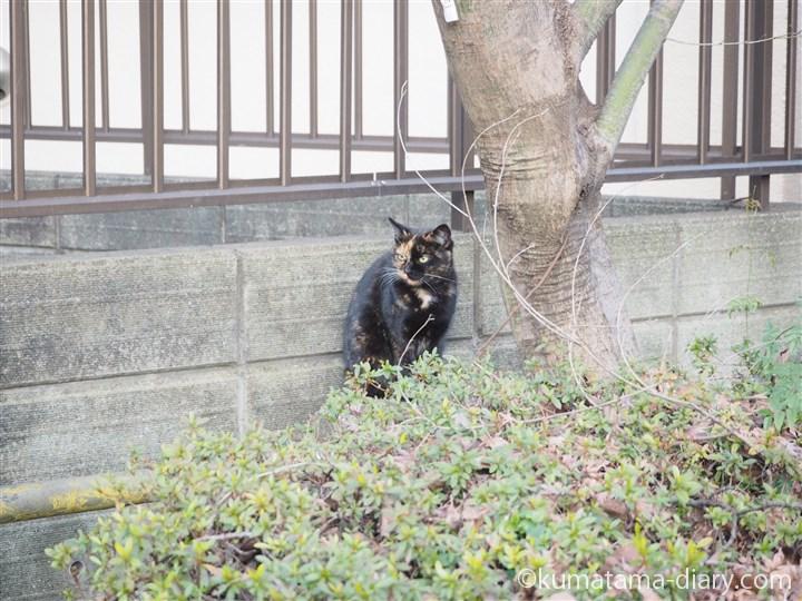 サビ猫さん横顔