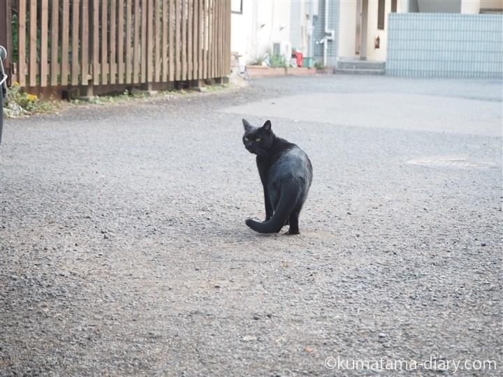 後ろを振り向く黒猫さん