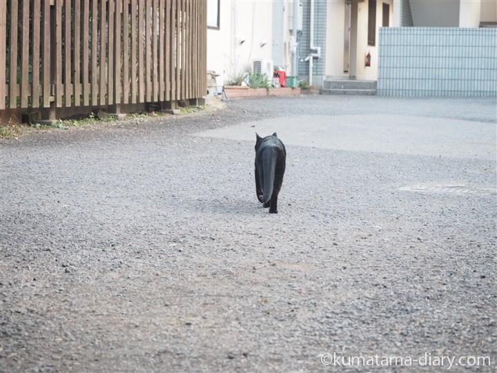 駐車場を横切る黒猫さん