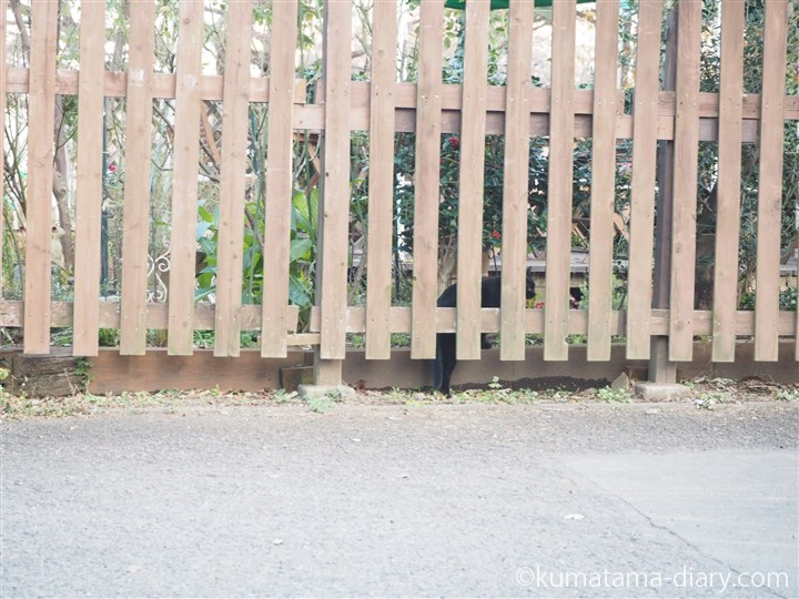 塀をもぐる黒猫さん