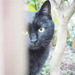 サイクリングロードで見かけた黒猫さん