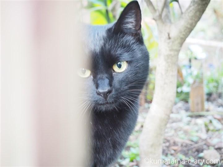 黒猫さんアップ
