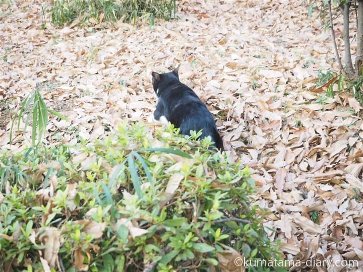逃げる黒白猫さん