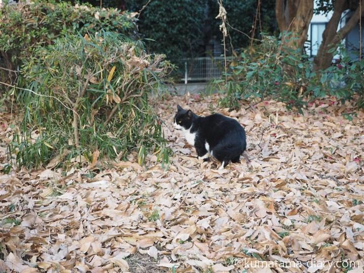 座る黒白猫さん