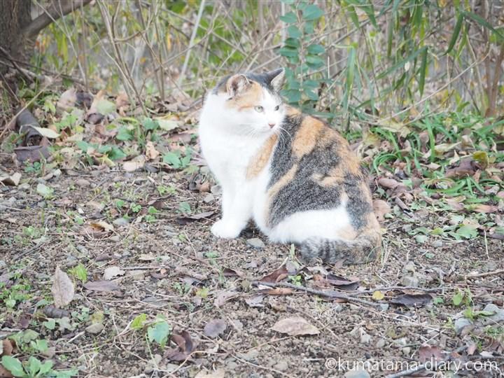 三毛猫さん横顔