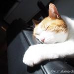 頭が落ちても気にせずひなたぼっこをする猫