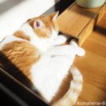 食器スタンド「まんま台」に頭を乗せて眠る猫