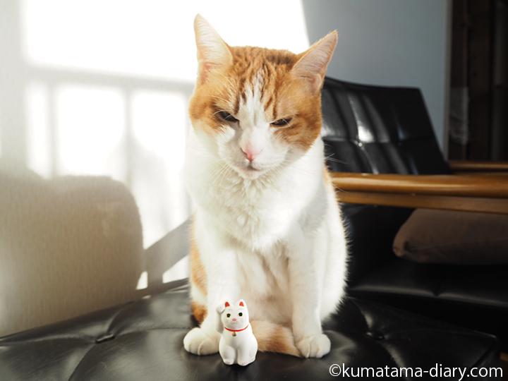 たまきと招き猫