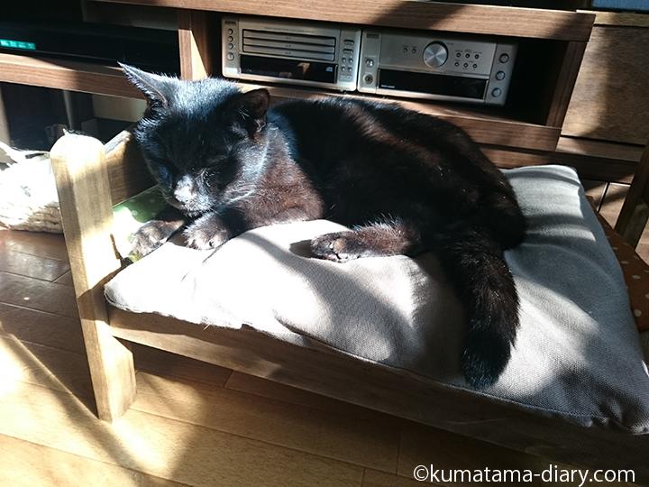 IKEA猫ベッドを使うくま