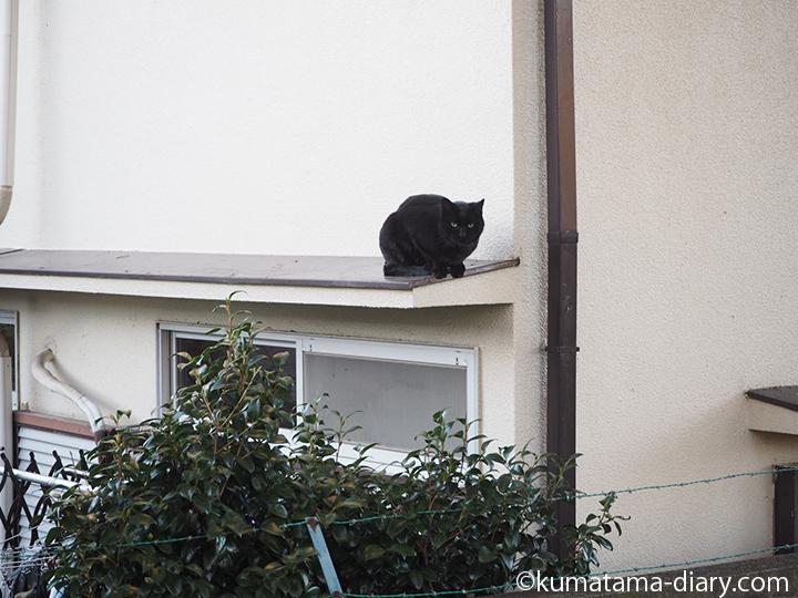 豪徳寺の黒猫さん