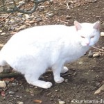 彼が見かけた黒猫さんと白猫さんと茶トラ白猫さん