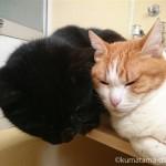 お風呂で手のひらからお湯を飲む猫