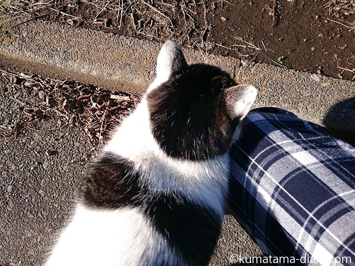 近所のキジトラ白猫さんすりすり