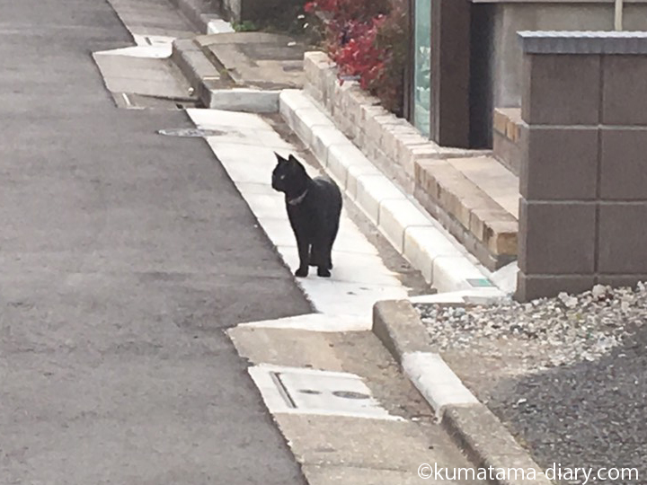 住宅街の黒猫さん