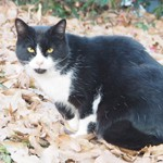 サイクリングロードで見かけたあごが黒い黒白猫さん