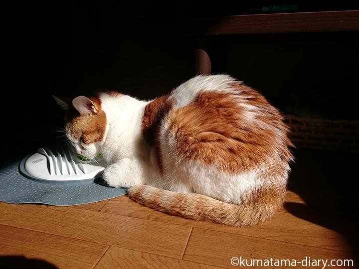 cat it マッサージセンターで眠るたまき