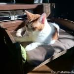 IKEAの「DUKTIG 人形用ベッド」を横取りした猫