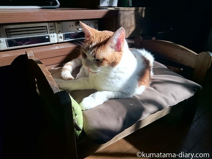 IKEA猫ベッドを使うたまき