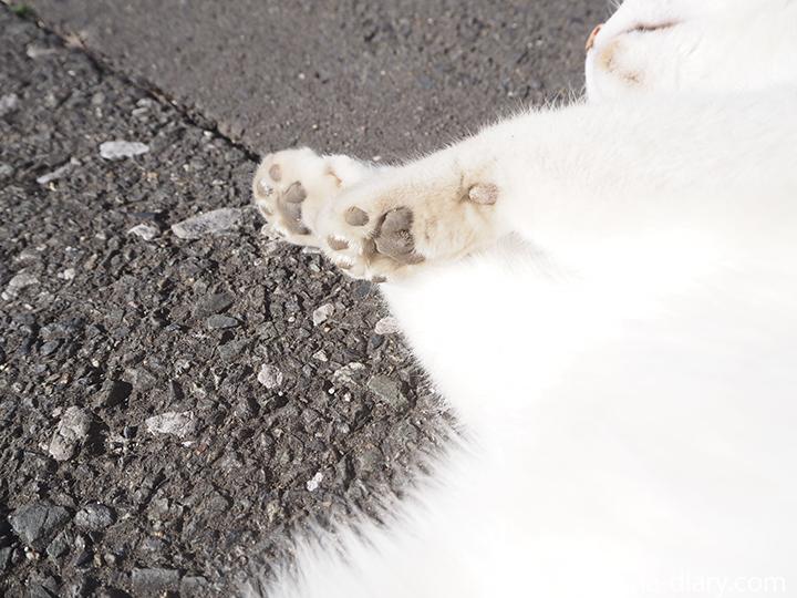 キジトラ白猫さん肉球