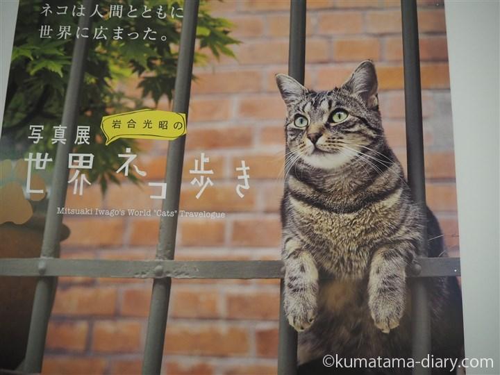 写真展「岩合光昭の世界ネコ歩き」