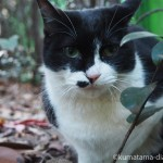 「東池袋中央公園」の黒白猫さん