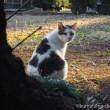 振り向くキジトラ白猫さん