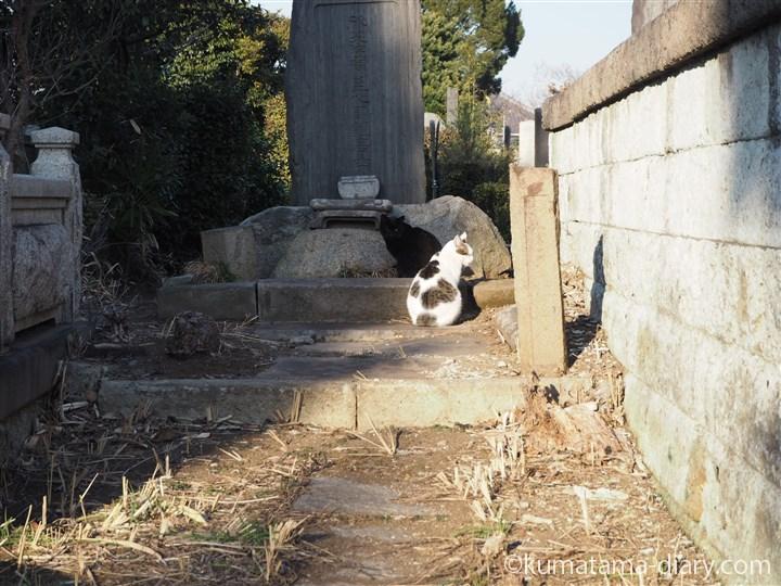 黒猫さんとキジトラ白猫さん