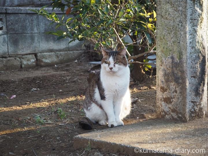 近くに居た猫さん