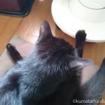 「YAMAZEN 遠赤外線カーボンヒーター」の台座に足を置いて眠る猫