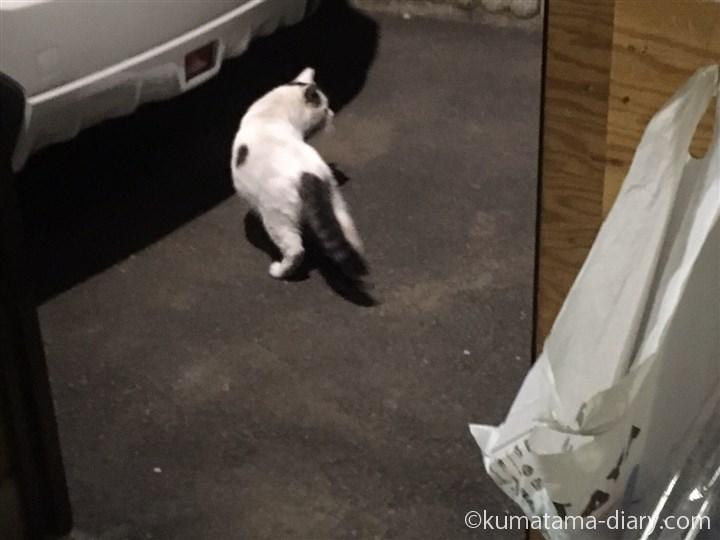立ち去るボス猫さん
